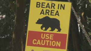 Safety tips to be 'bear aware' this summer