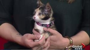 Adopt a Pet: kittens Cali and Dora looking for homes
