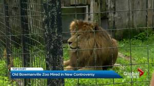 Animal activists enraged over new program at former Bowmanville Zoo
