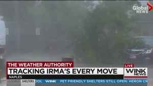 Tree comes crashing down behind reporter in the middle of live Hurricane Irma report
