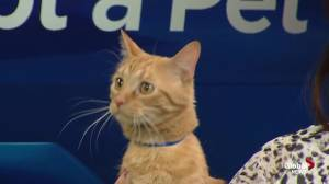 Edmonton Humane Society: Quiche & Limbani