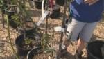 Get Gardening Part 7 – Ornamental Trees