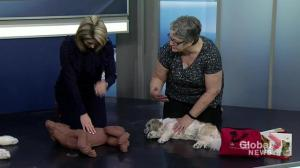 St. John Ambulance teaches how to do first aid on pets