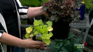 Garden Tips: green in the shade