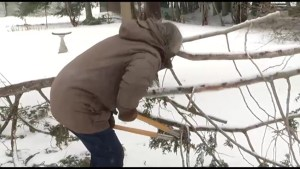 Clean up continues across Peterborough after Spring ice storm