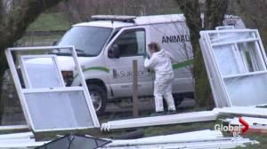 SPCA raid Surrey property, seize 82 animals