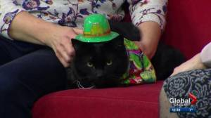 Calgary Animal Services Pet of the Week: Frito