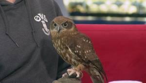 OWL's Open House