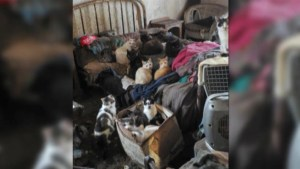 Dozens of cats removed from home in Stone Mills Township