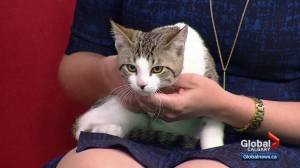 Calgary Animal Services Pet of the Week: Julian (03:06)
