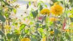 Global News Morning: Get Gardening Fall Series Part 4