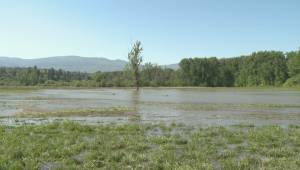 Dikes and dredging; flood mitigation options in Kelowna