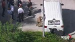 Police surround van in Plantation, FL following news suspect arrest in connection to pipe bombs