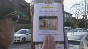 Desperate search underway for stolen dog