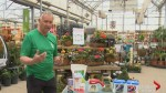 Gardening Tips: getting gardens started