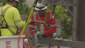 Power line that electrocuted two South Okanagan owlets being bird-proofed, says FortisBC (02:13)
