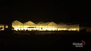 Fire-like glow at Bowmanville greenhouse confuses residents