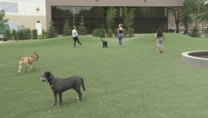 Winnipeg looking at adding more off-leash dog parks