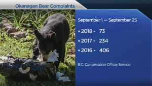 As bear activity spikes in the Okanagan, residents being urged not to attract the animals into their neighborhood by leaving garbage out overnight