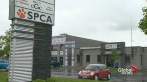 Montreal's SPCA West may close