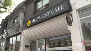 Teenage boy denied entry to cat café because of his wheelchair (01:38)