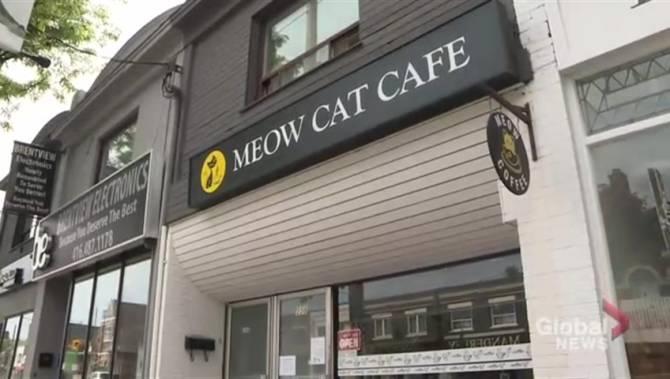 Teenage boy denied entry to Toronto cat café because of his
