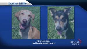 Shelter Pet Project – Gunner and Ellie