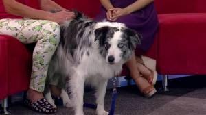 Ask an Expert: Dog behaviour advice