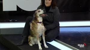 Second Chance Animal Rescue shares some adoptable pets