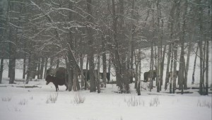Parkland County woman Patricia Moore charged with alleged mistreatment of horses