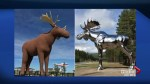 The moose feud between Norway and Saskatchewan