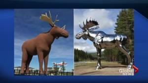 The moose feud between Norway and Saskatchewan