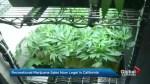 Recreational marijuana sales now legal in California