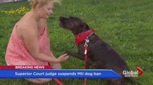 Judge temporarily suspends Montreal pit bull bylaw (02:10)