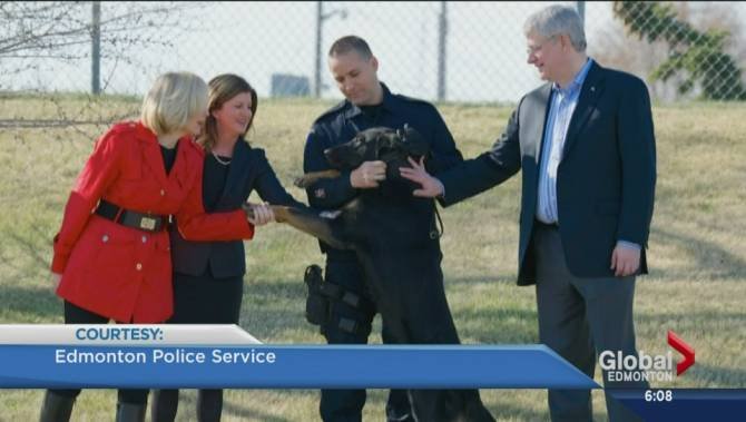 New Brunswick Service Dog Legislation