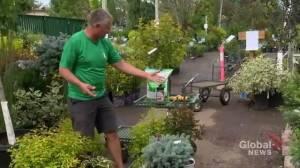 Gardening Tips: companion planting