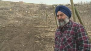 Elk devastate Okanagan apple orchard