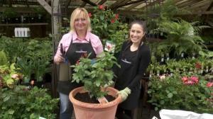 GardenWorks: Roses