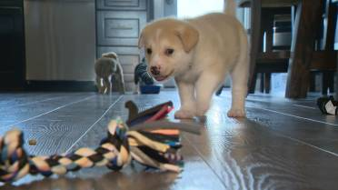 Rescue group looking for puppy escorts from Regina to Vancouver