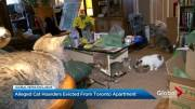 Play video: Alleged Toronto hoarders evicted after 68 cats and dog found in apartment
