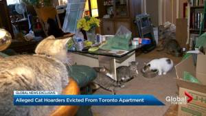 Alleged Toronto hoarders evicted after 68 cats and dog found in apartment (02:16)