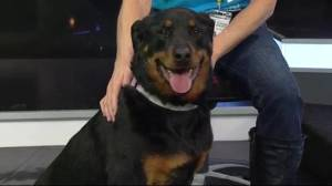 Edmonton Humane Society: Mica & Silly Sam