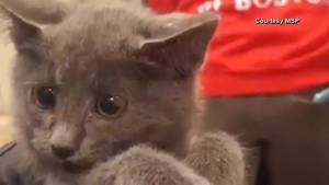 Boston police shut down tunnel to save Kitten