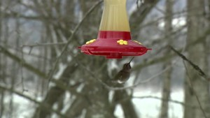 Experts warn about improper feeding of birds during winter