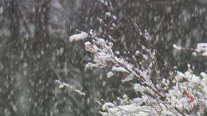 June snowfall blankets parts of southern Alberta