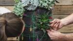 GardenWorks: Succulent Christmas tree