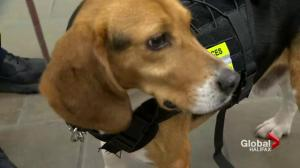 Canada Border Services Agency's new detector dog at Halifax airport has had a rough life