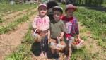 Strawberry season kicks off in Quebec
