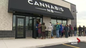 Cannabis NB laying off staff