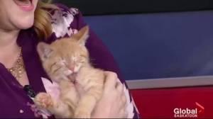 Adopt a Pet: Sam